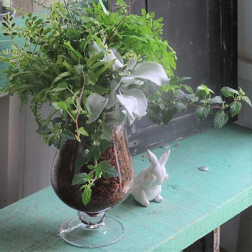 ガラスの器夏に涼しげ☆グリーンのベラボン植え