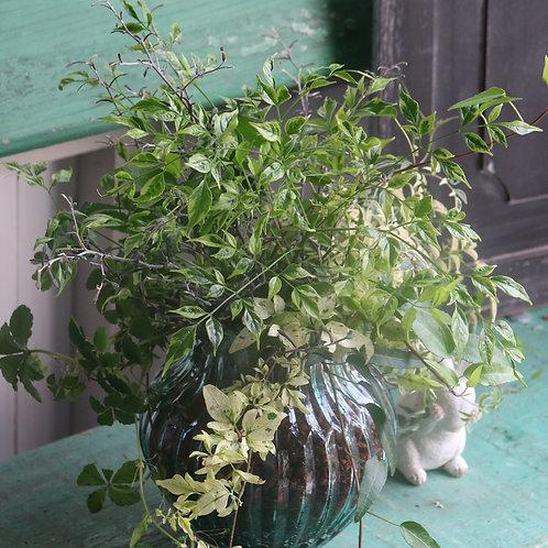 夏に涼しげ☆グリーンのベラボン植え