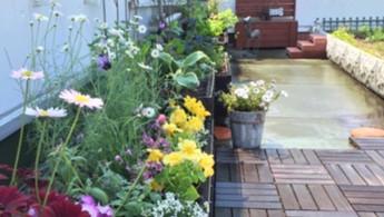 屋上花壇お花植え替え