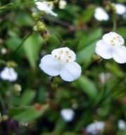 3月27日  誕生花はブライダルベール  花言葉 幸福