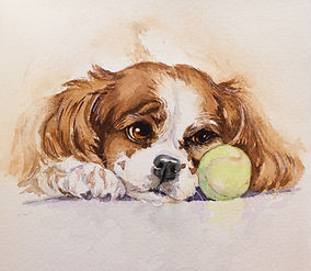 Dog Painting of King Charles Cavalier by SHerry Daerr
