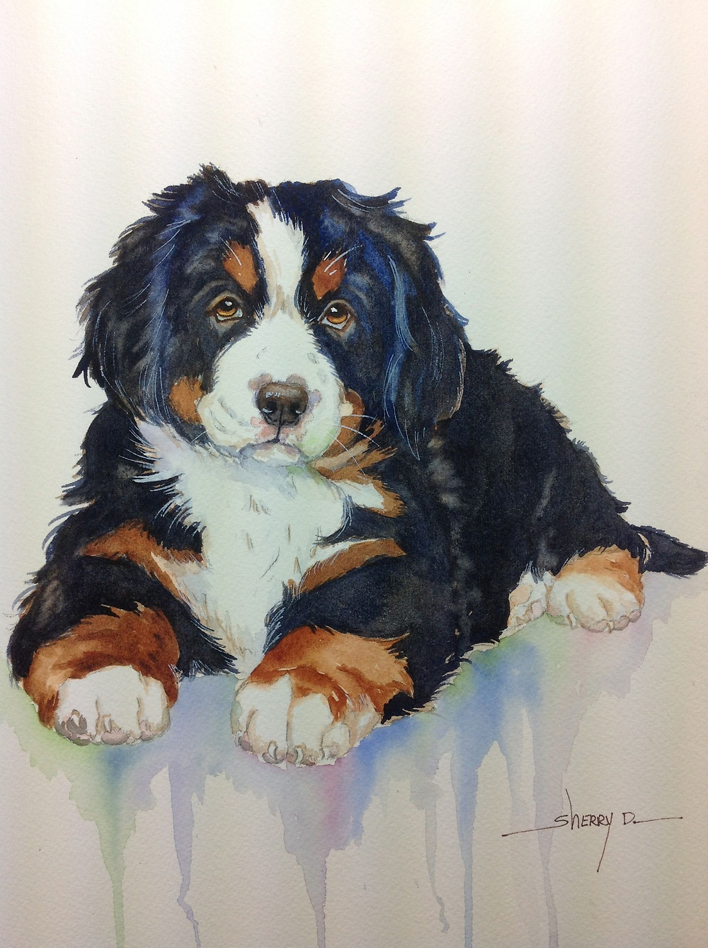 Bernese Mountain Dog Paintin