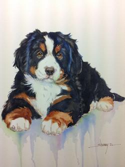 Bernese Mountain Dog painting