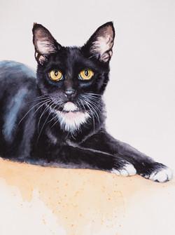 Catey Cat final