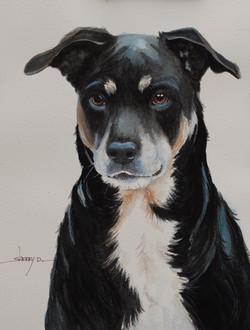 Black Dog Portrait Painting by Sherr