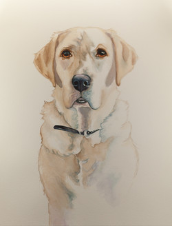 Labrador Portrait Painting by Sherry