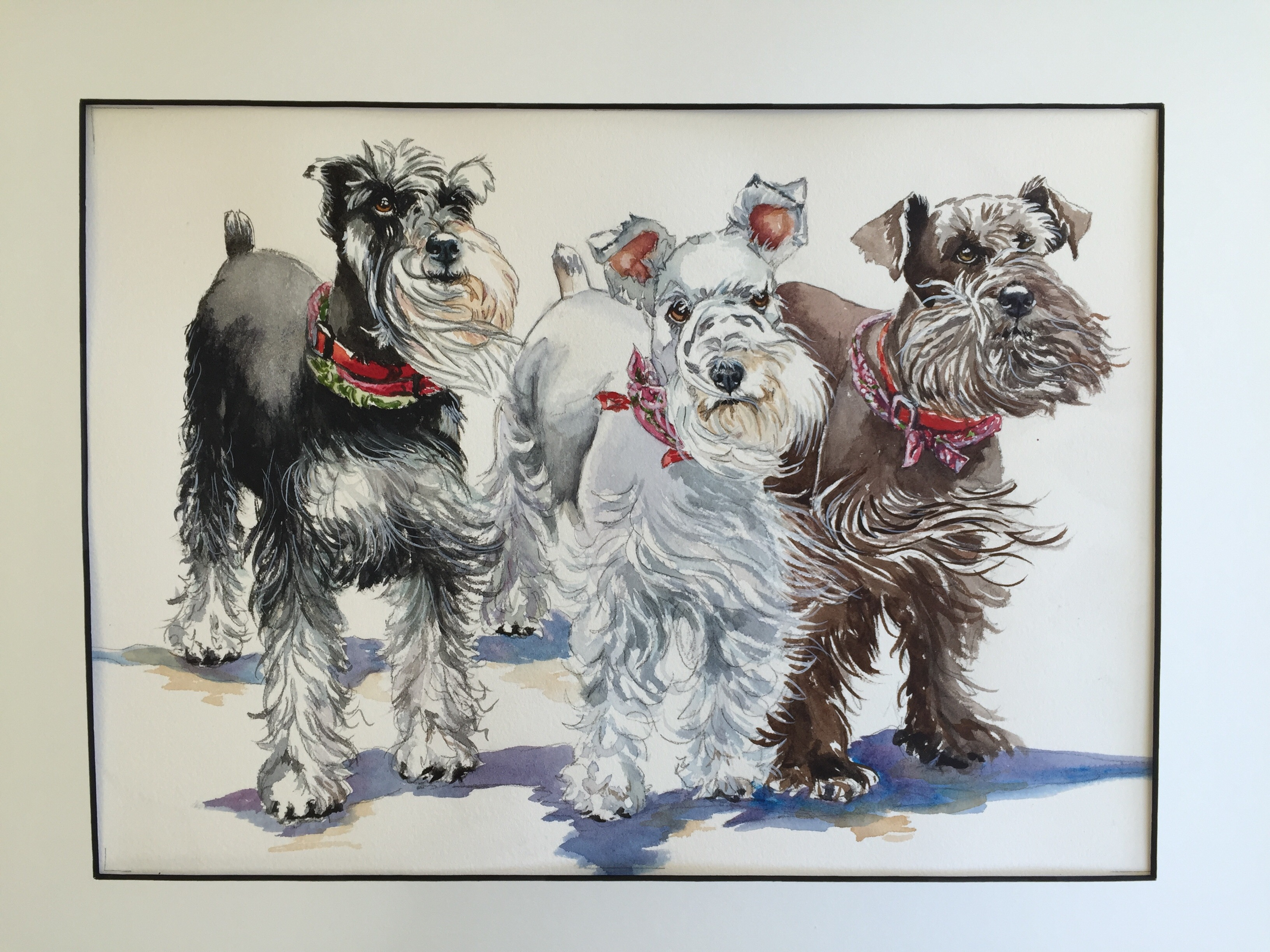 Watercolor painting of 3 Schnauzers