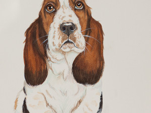 "Basset Hound-  ""Could be a table surfer - watch out!"""