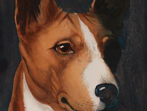 Basenji- The Bark-less Dog