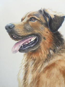 Chester watercolor painting of dog