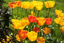 Flowers in Royal Pavilion Gardens.jpg