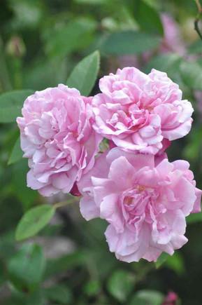 Flowers in Royal Pavilion Gardens