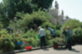 Volunteering at the Royal Pavilion Gardens