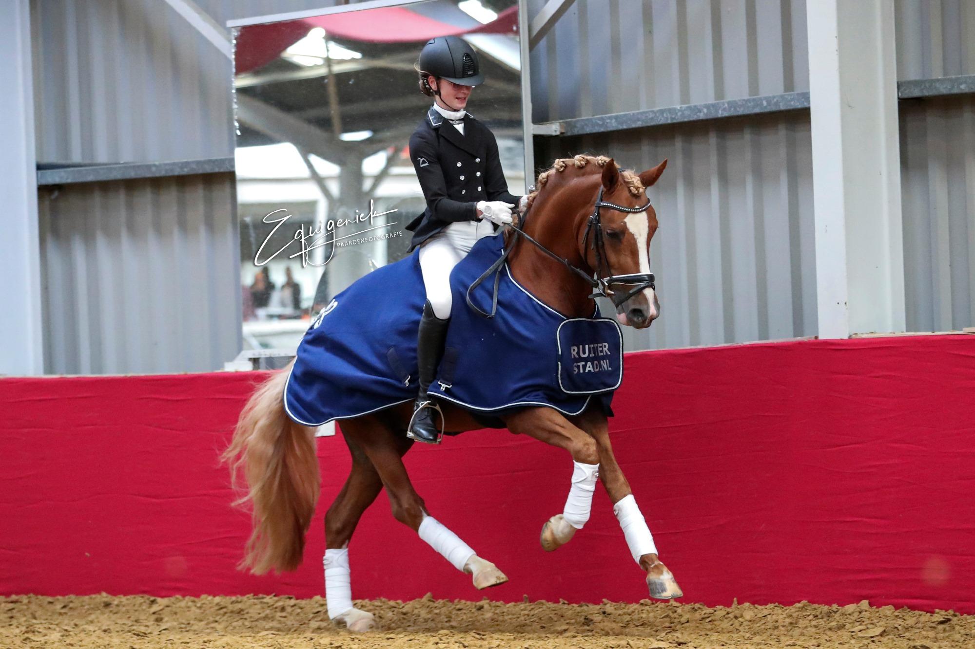 4-jr pony's His Royal Badness Isa Hollan