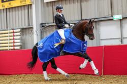 5-jr paard Kentucky (Desperado x Jazz) S