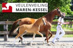 Veulenveiling Maren-Kessel
