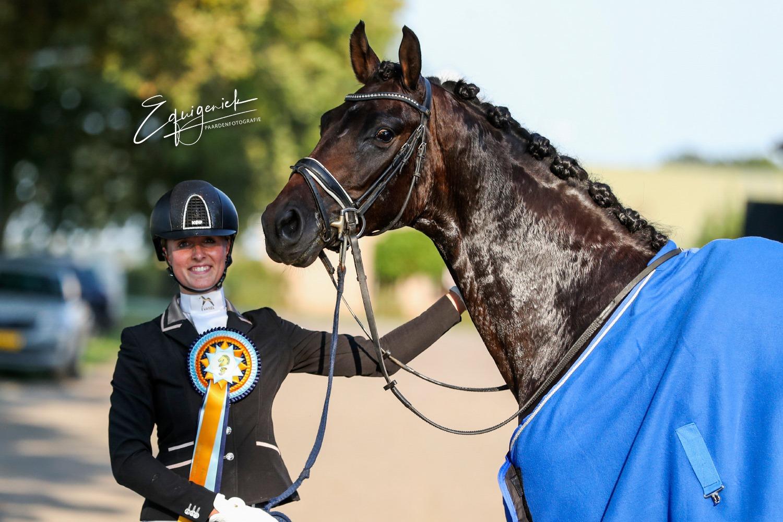 3-jr paarden2