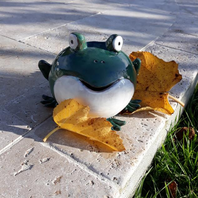grenouille à bouche blanche