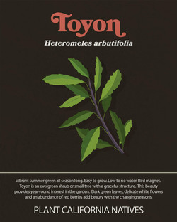 Toyon Informational