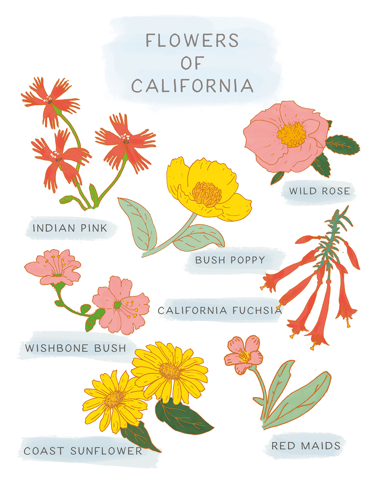 Flowers of California