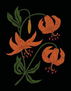 Lilium humbodtii