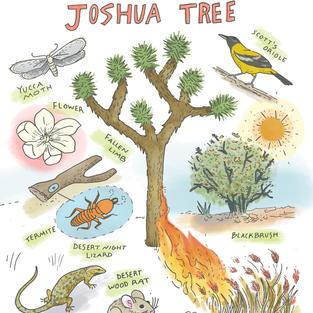 Joshua Tree Woodland