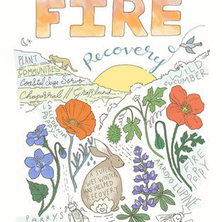 Fire Recovery