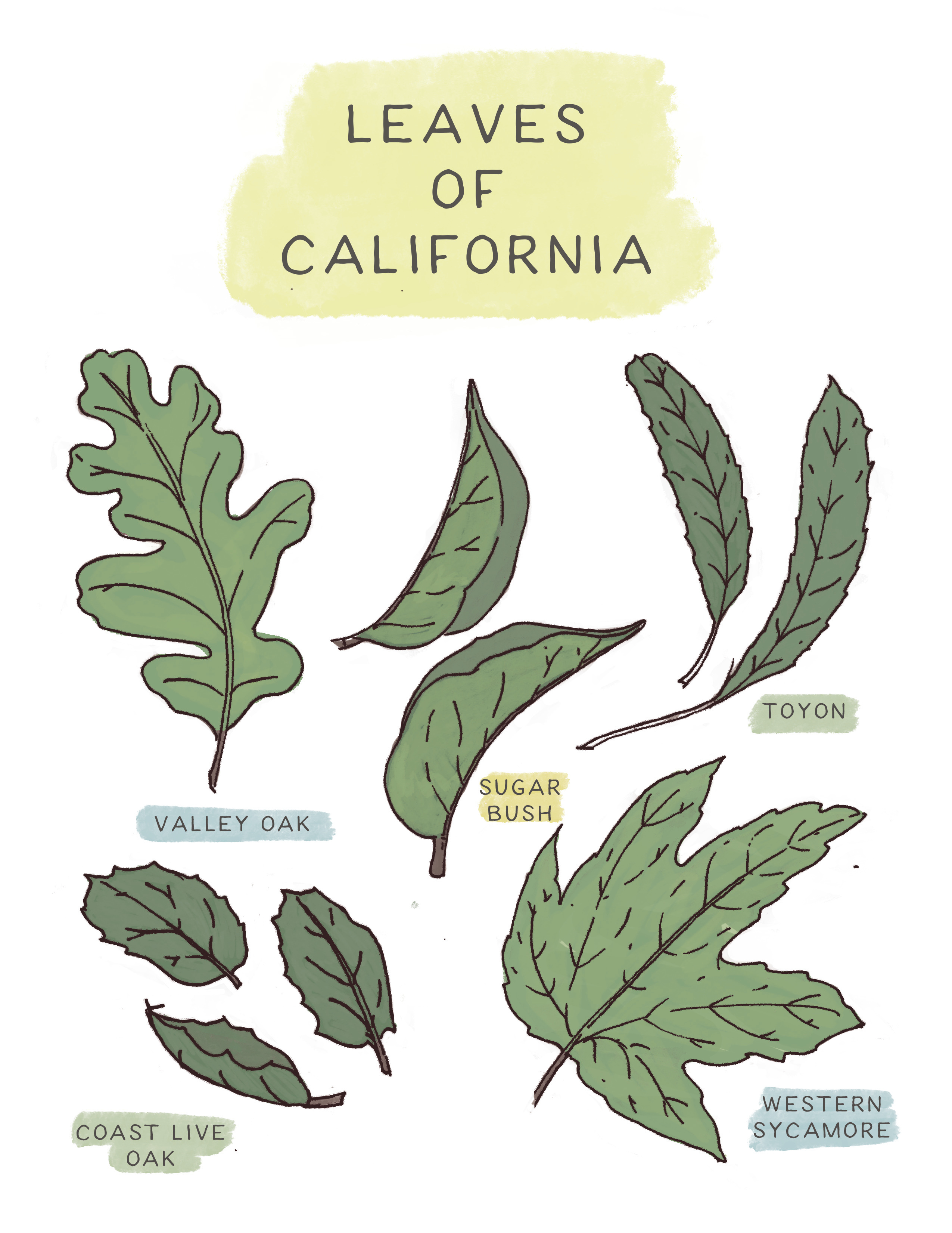Leaves of California