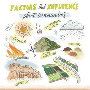 Factors That Influence Plant Communities