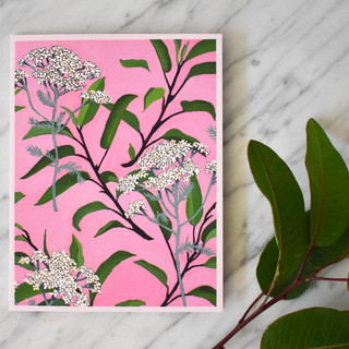 Achillea Dream Card