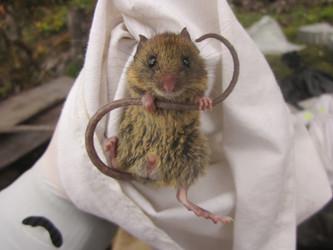 Publicación sobre la dieta de roedores en el bosque montano