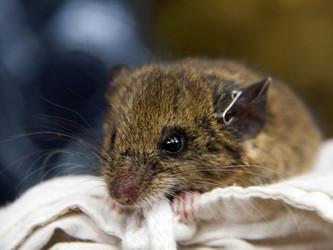 Publicación sobre la dispersión de semillas por roedores en el bosque montano