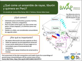 Una dieta diversa para las rayas y otras especies alrededor del terminal marítimo de PERU LNG