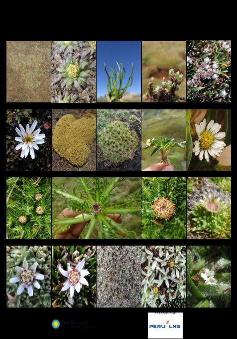 Nueva guía fotográfica de las plantas comunes en los  bofedales