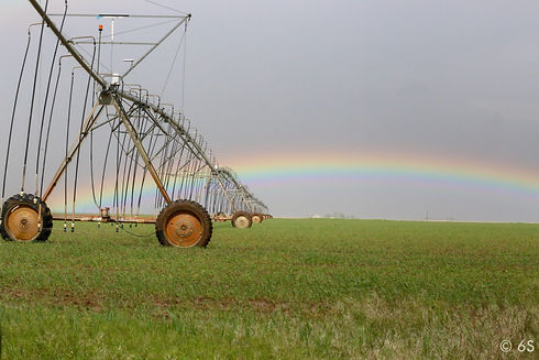 Wheat field rainbow.JPG