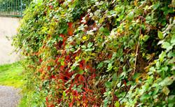 Autum In The Hedge.jpg