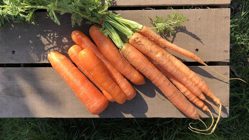 Carrots 500g