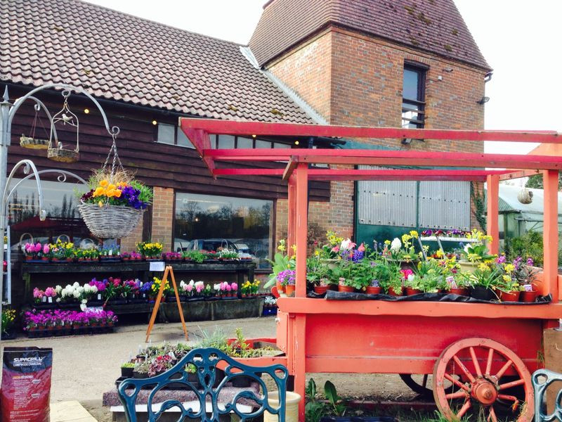 The farm shop in summer