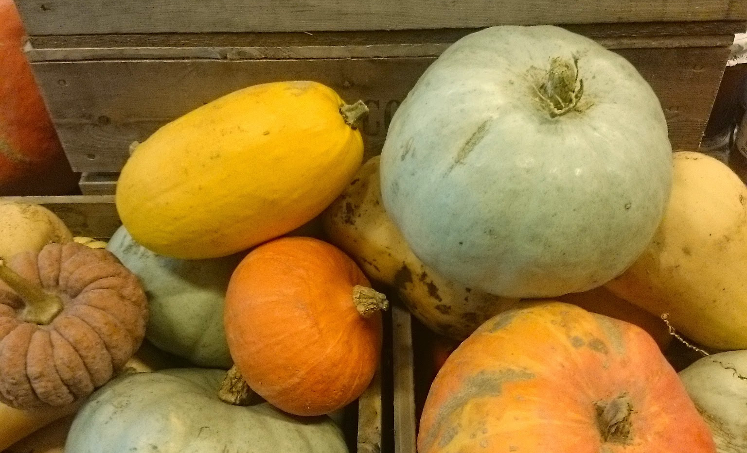 Autumn squash and pumpkins