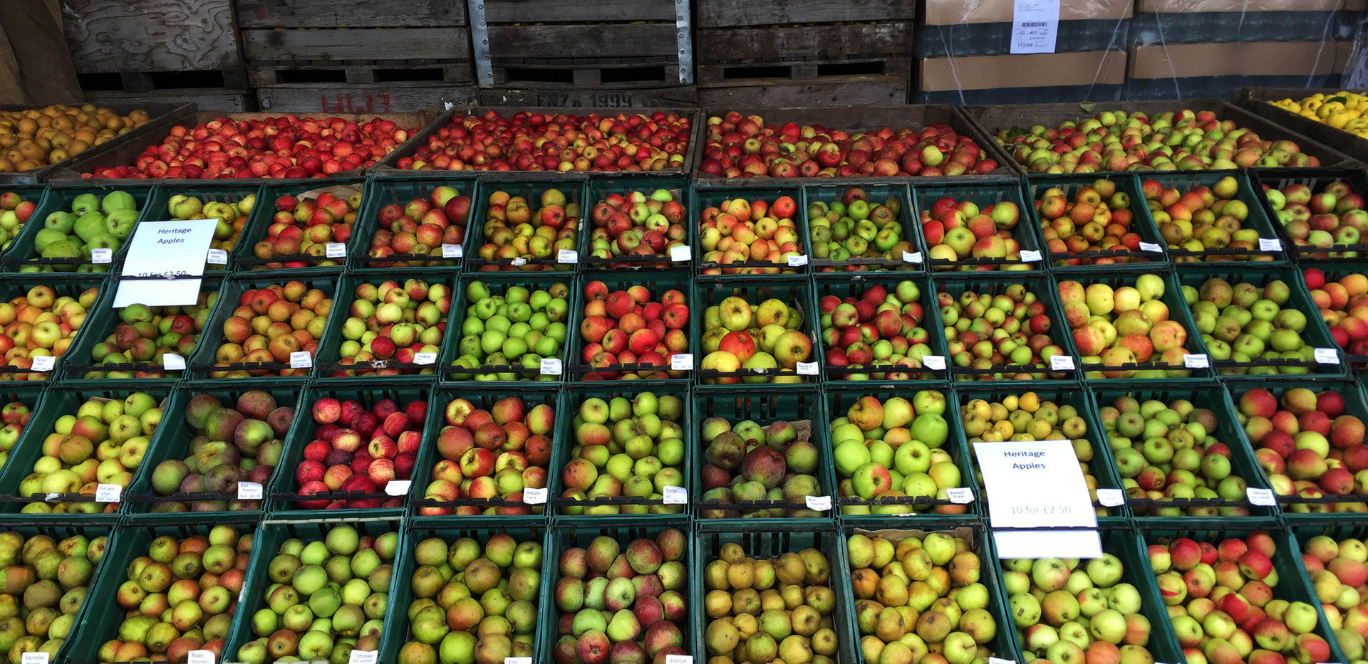 Rare varieties display at the apple fayre
