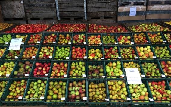 Rare varieties display at the apple fayre