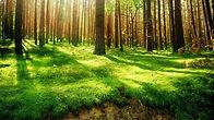 Forest-Wallpaper.jpg