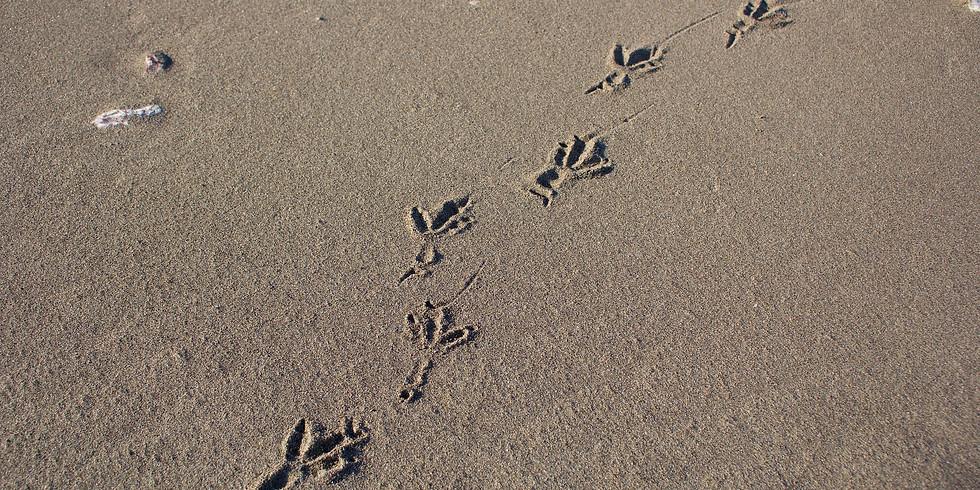 """Śledztwo na plaży - """"Kto tu był, kto tu mieszka"""""""
