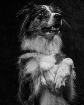 Pet Portraits 11 | Wheatman Photography |