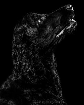 Pet Portraits 17 | Wheatman Photography |