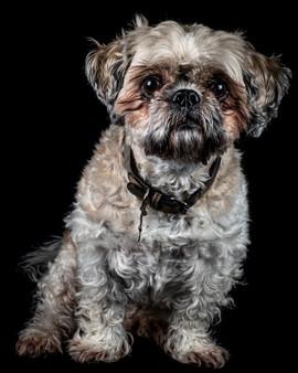 Pet Portraits 20 | Wheatman Photography |