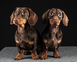 Pet Portraits 18 | Wheatman Photography |