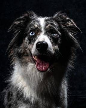 Pet Portraits 5 | Wheatman Photography |