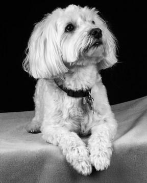 Pet Portraits 21 | Wheatman Photography |