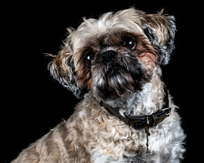 Pet Portraits 19 | Wheatman Photography |